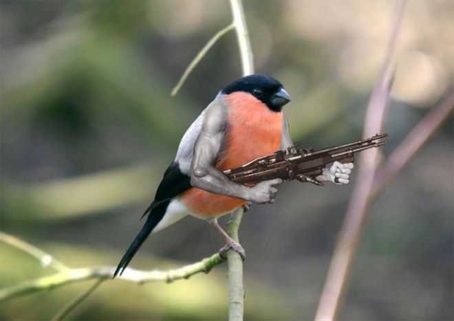 Gallery Of Birds With Human Arms Funny Animal Pictures Rare Animals Animal Pictures