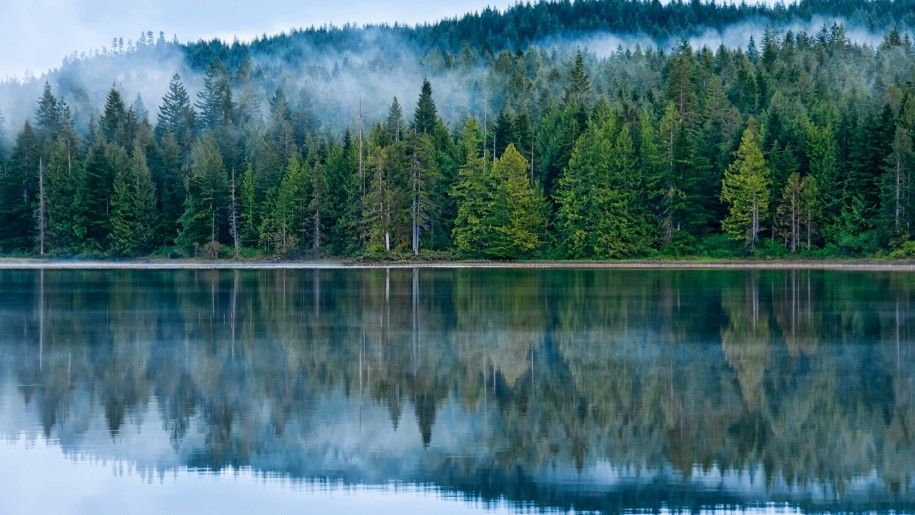 Reflection On The Lake Pine Forest Fog Hd Desktop Wallpaper Nature Desktop Desktop Wallpaper Bridge Wallpaper