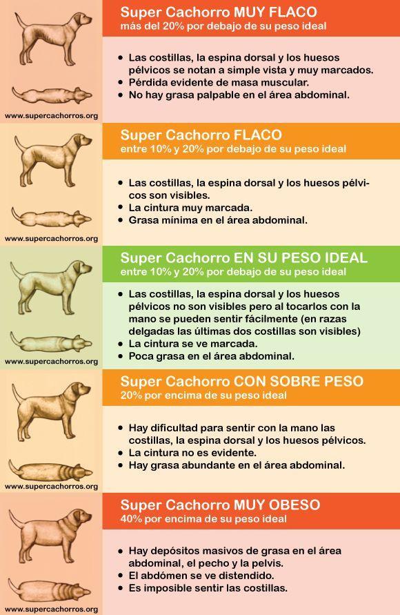Photo of Descubrí si tu mascota está en su peso ideal. #mascotas #perros #gatos #cuidad…