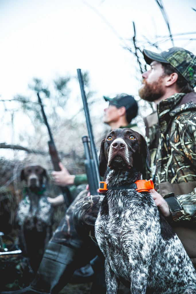 Ducking Around Duck Hunting Dogs Hunting Dogs Hunting Photography