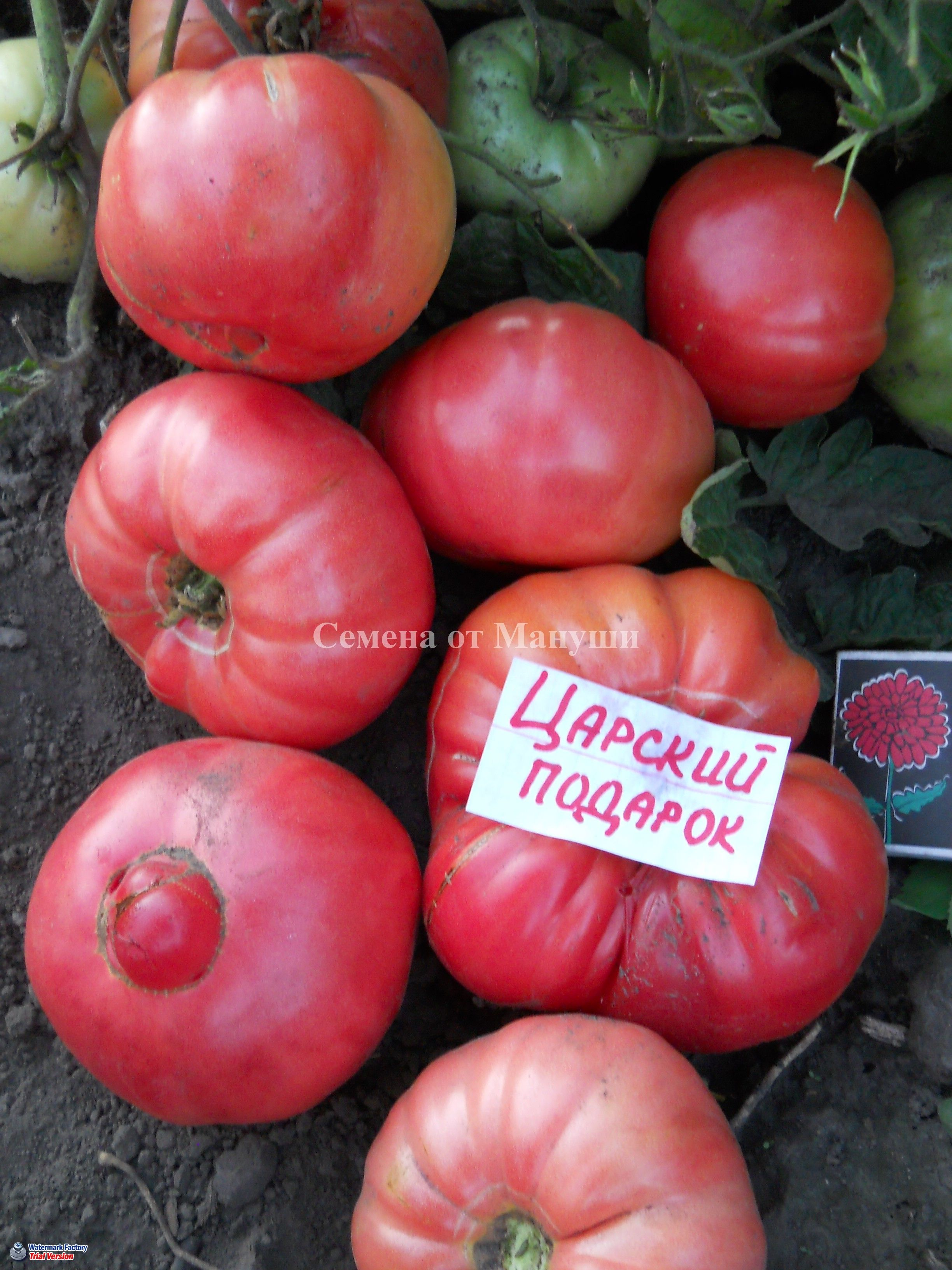 ювелирных изделий томат царский подарок отзывы и фото баварских