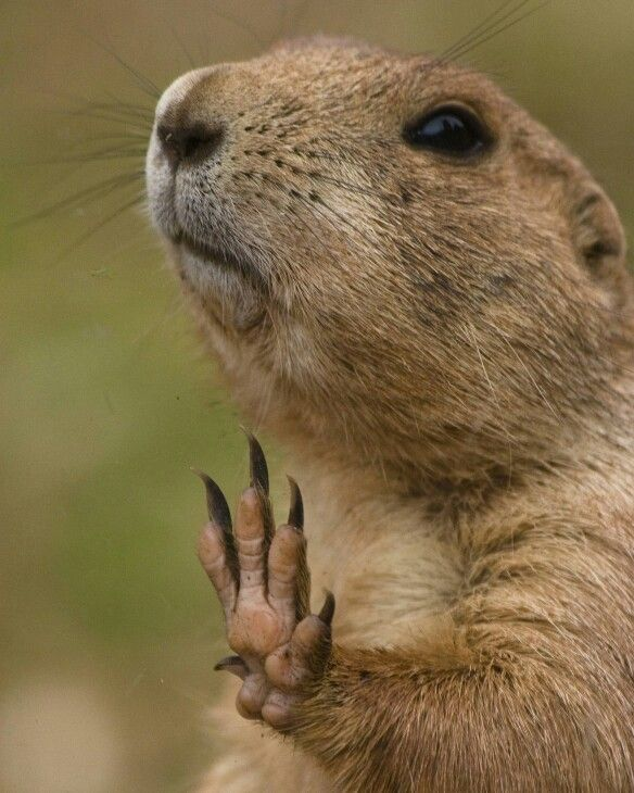 Talk To The Hand Funny Animal Pictures Animals Information Funny Animals