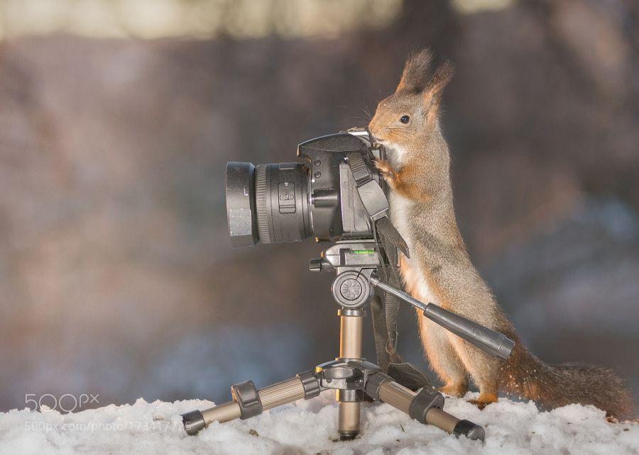 taking photos by geertweggen #photography #editorschoice #photooftheday #inspiration