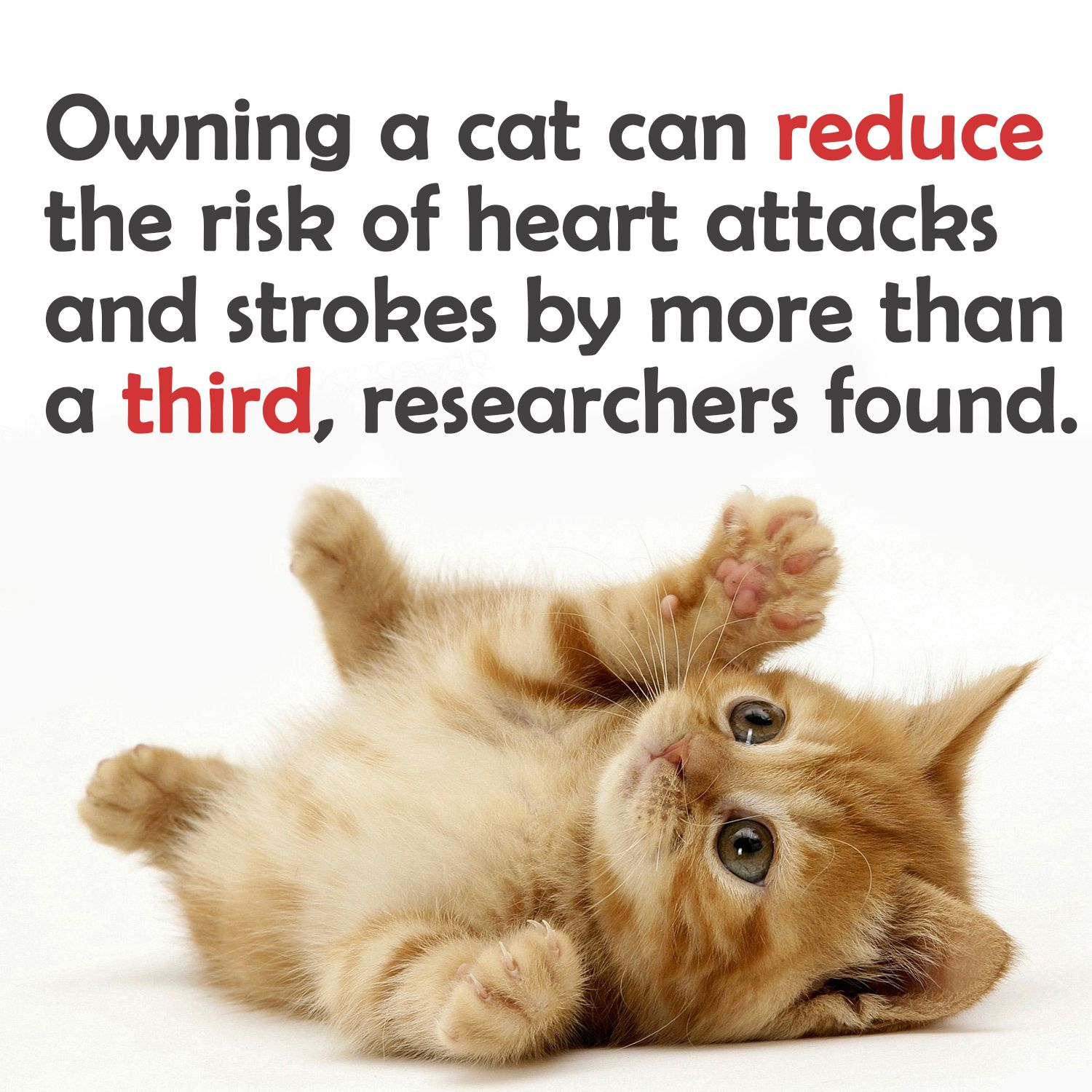 Cat Facts 33 things about cats you didn't know