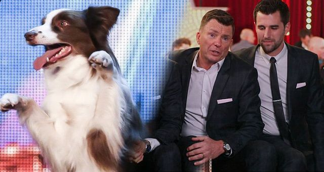 Solicitor crooners beaten by a dog in Britain's Got Talent final