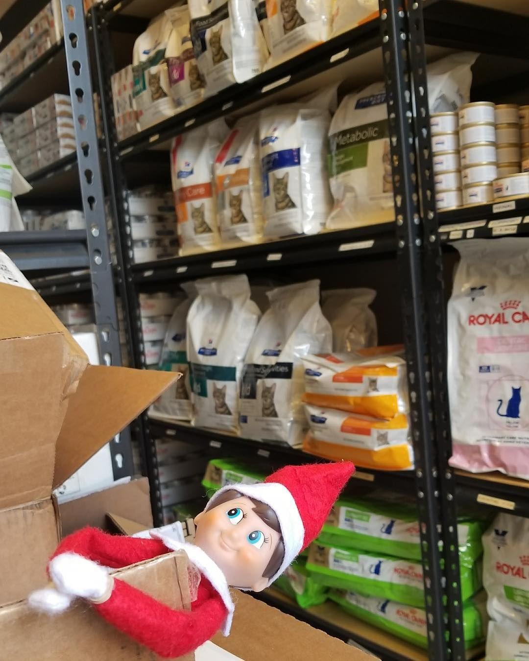 Animal Jobs Near Me Fun at work, Elf, The elf