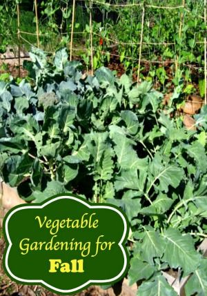 Vegetable Gardening For Fall | It's Time to Plan! | Moms Need To Know