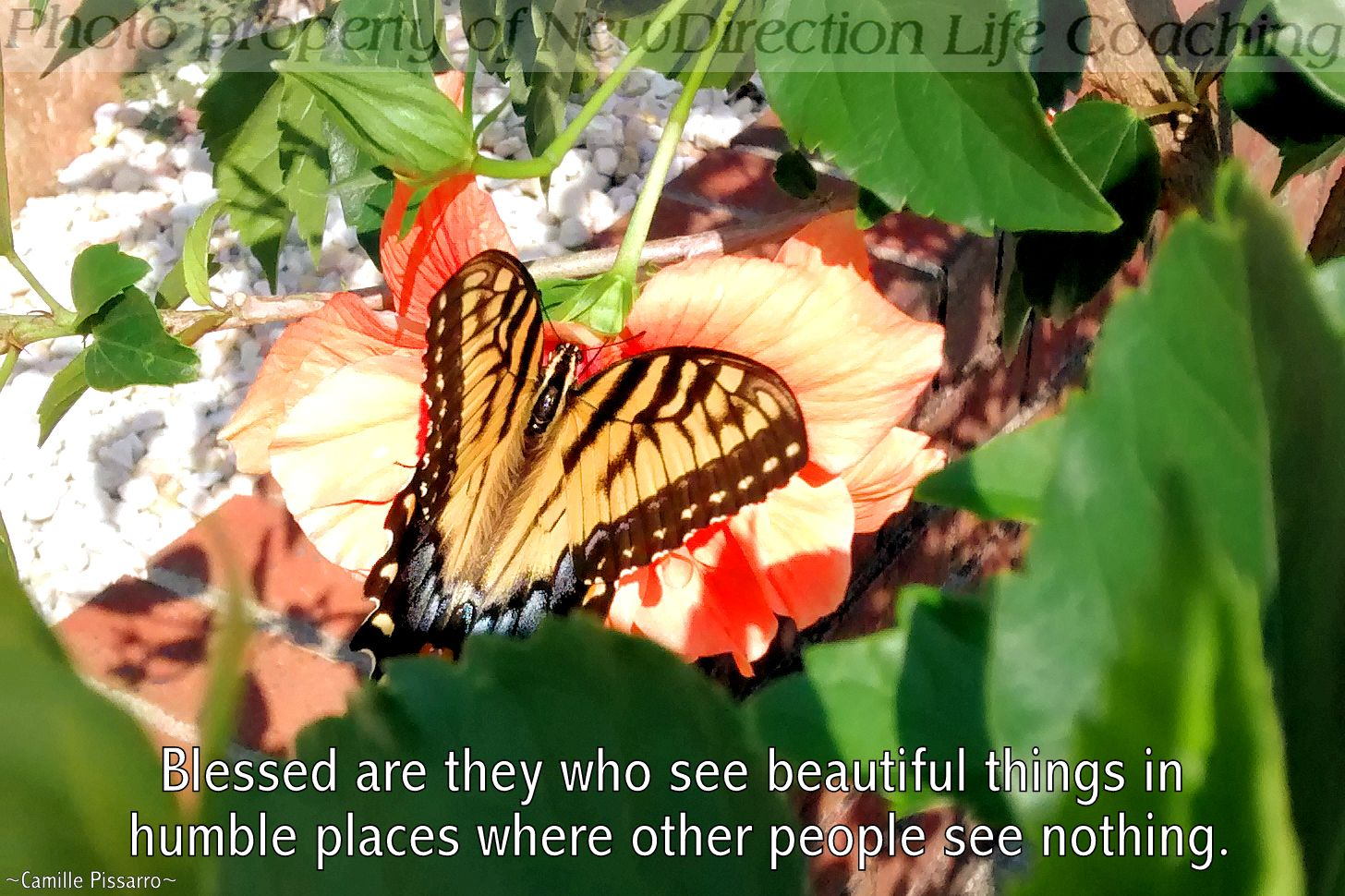 Beauty and blessings all around us | Life quotes, Life