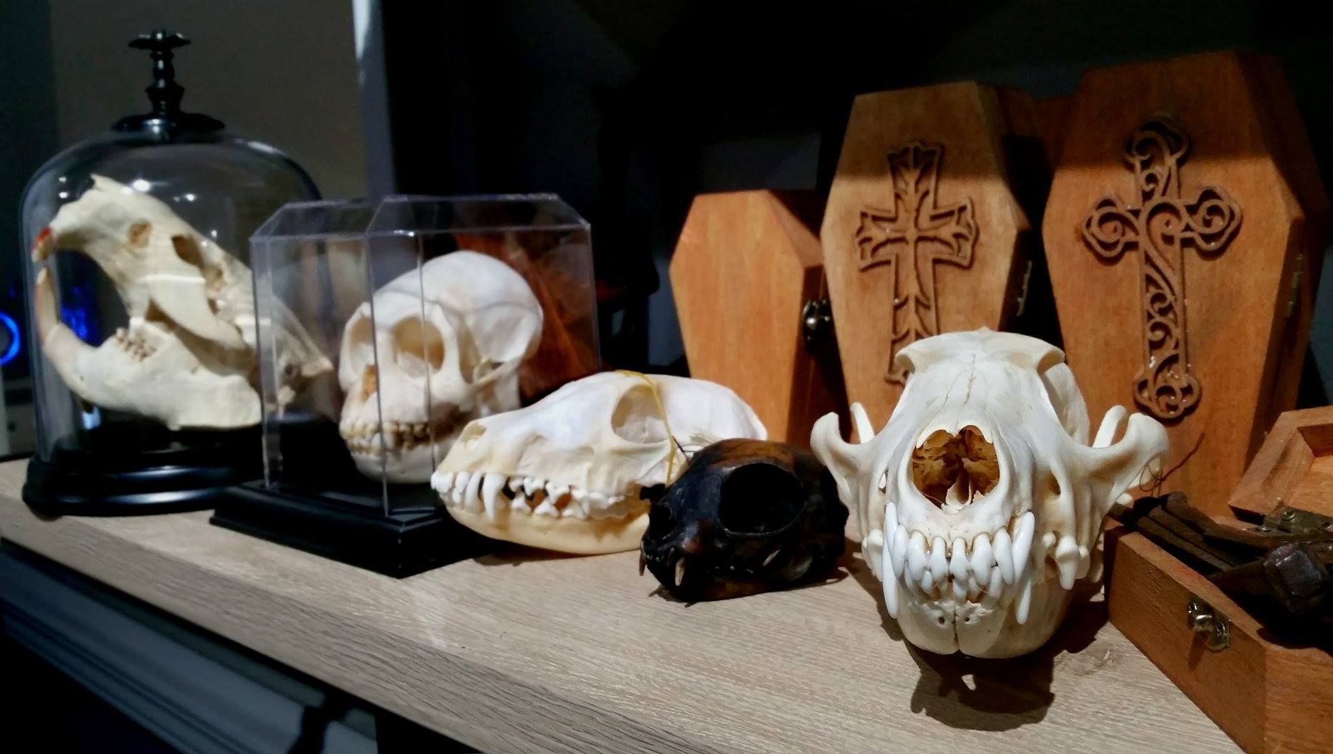 Shop Oddities, Dark Antiques, Horror Collectibles