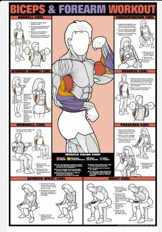 Biceps/forearms