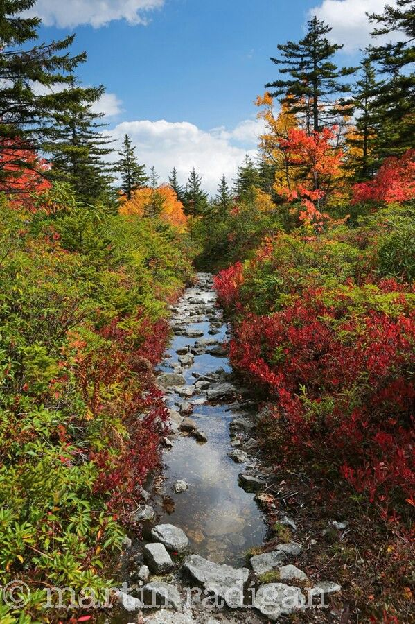 Fall at Dolly Sods Wilderness, West Virginia