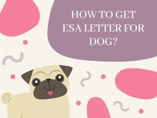 How To Get Esa Letter For Dog  In 2020