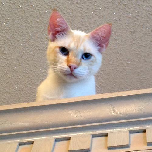 Adopt Mario On Petfinder Baby Cats Beautiful Cats Tabby Cat