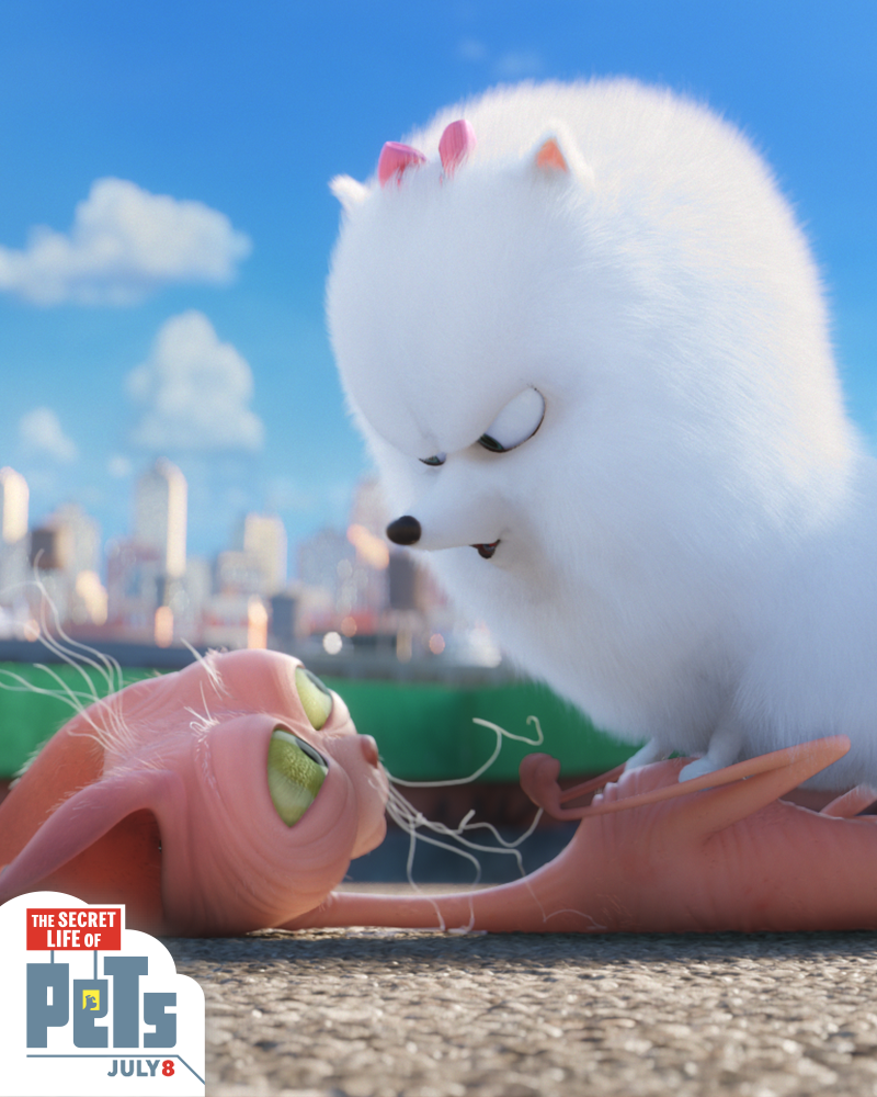 Gidget The Pomeranian Is Fierce When She Needs To Be The Secret Life Of Pets Now Playing Secret Life Of Pets Secret Life About Time Movie