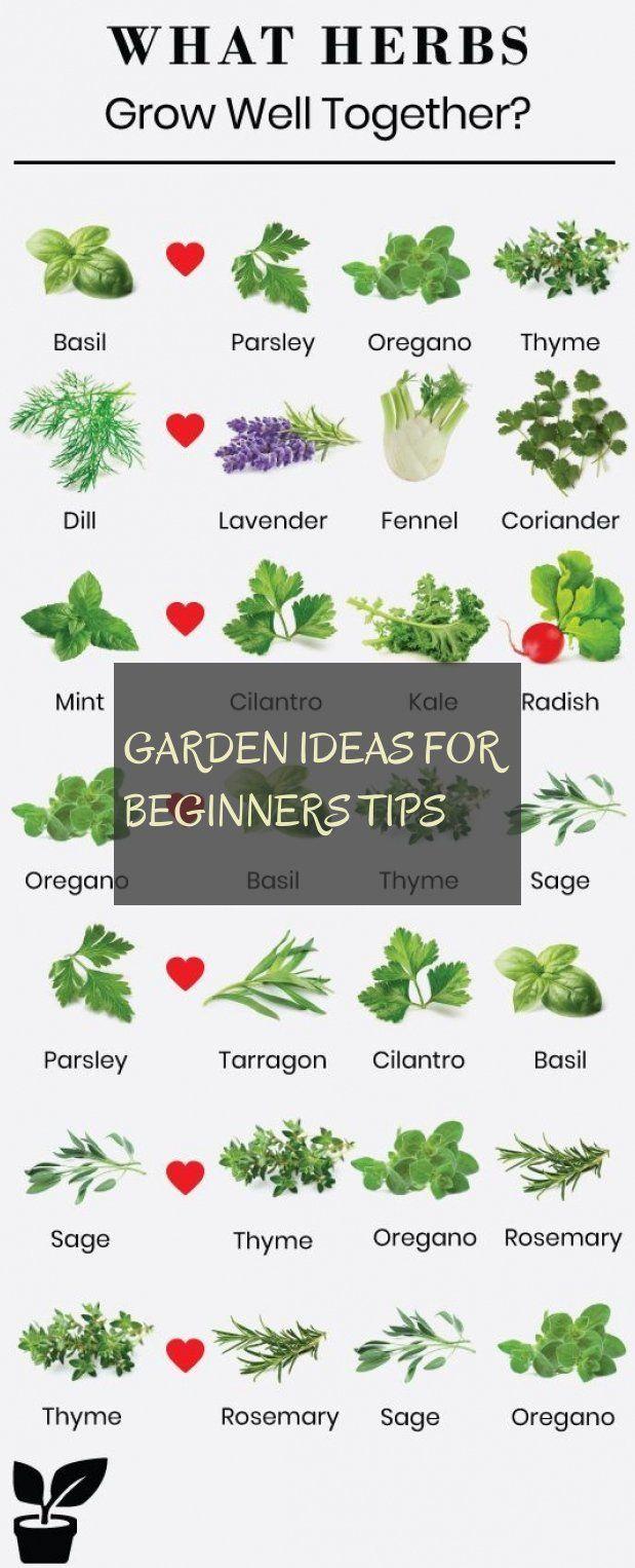 garden ideas for beginners tips