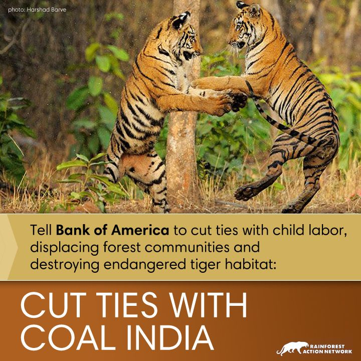 Tell Bank of America, No Forest Destruction for Coal
