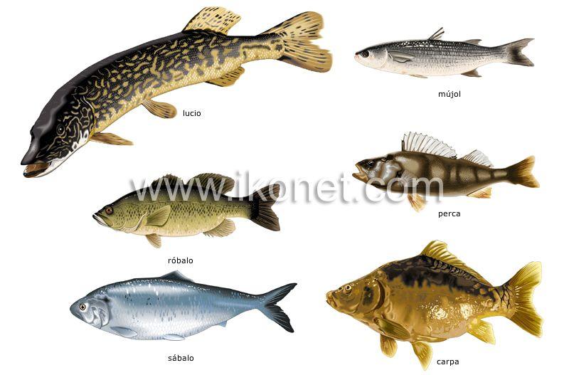 productos alimenticios y de cocina > productos alimenticios > peces ...