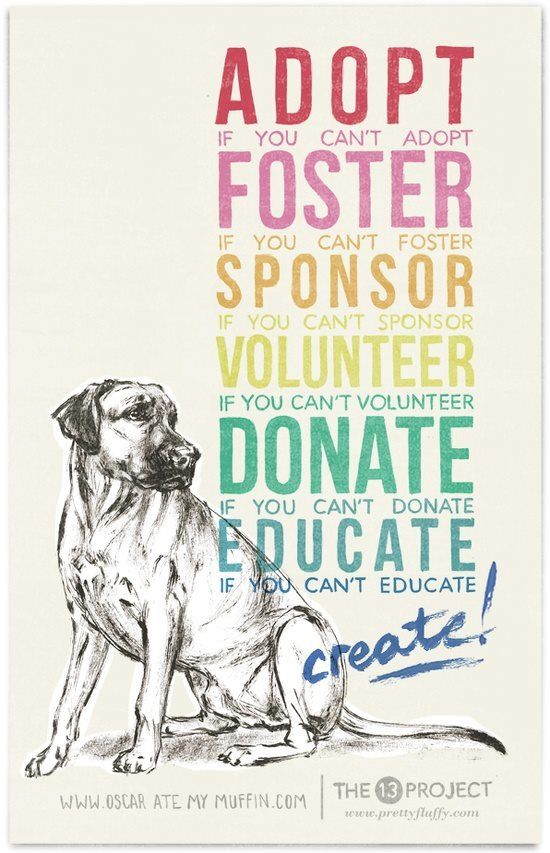 Be A Part Of Something Great And Giveaway Winners Dog Milk Words Animal Shelter