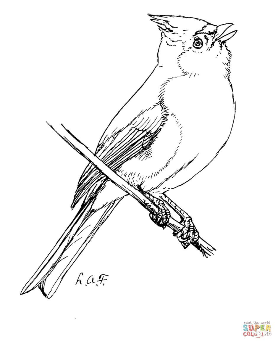 Tufted Titmouse Coloring Page From Titmouse Category Select From