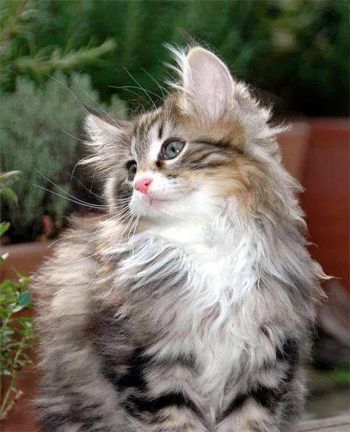 cat fur ball