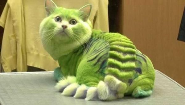 Clip Jobs The Top 10 Weird and Bizarre Dog & Cat Haircuts