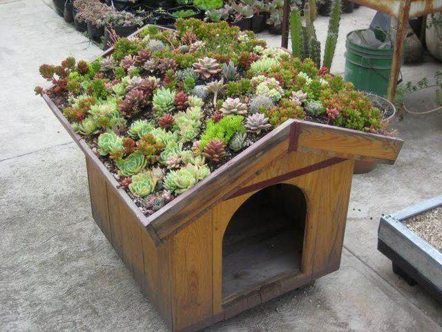 Green Gardening Dog House Windowsill Garden Roof Plants