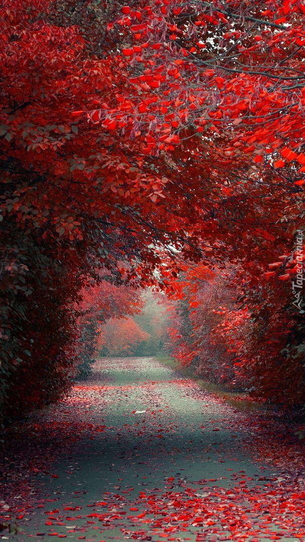 Jesien Przeszla Przez Park Nature Backgrounds Autumn Scenery Nature Wallpaper
