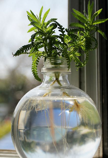 plante verte hydroculture