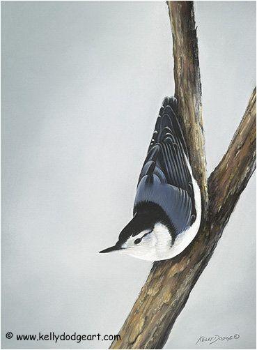 Assup Wildlife Art Bird Artwork Original Paintings