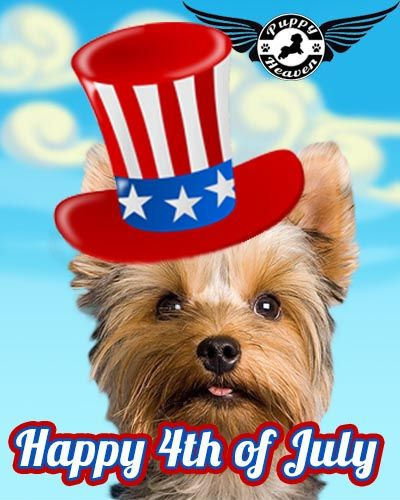 Puppy Heaven wishes you a Happy Fourth of July! To celebrate we are offering $150 off the adoption price of our puppies for sale. Enjoy your holiday with a new fury friend. Offer valid July 2-July 7 PST.