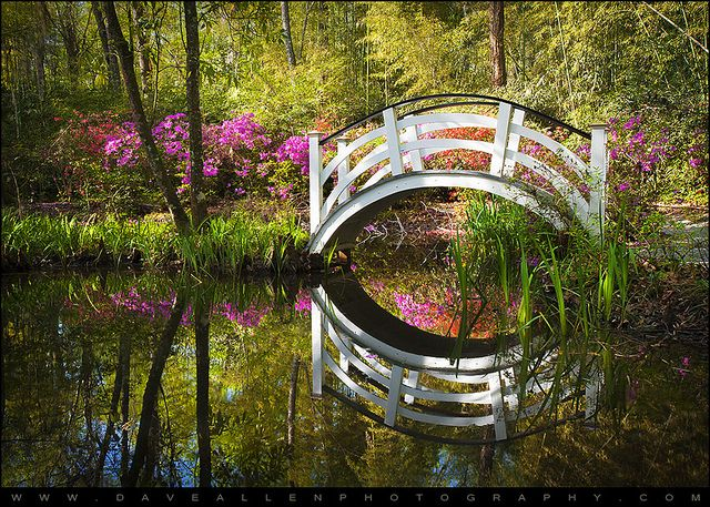 7cc0fa7f8b6dfaf02abc30d481fbbc42 - Magnolia Plantation & Gardens 3550 Ashley River Road Charleston Sc