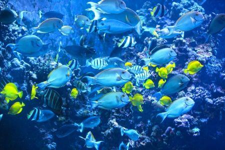 Tahiti reef tahiti water ocean bora bora dive for Bora bora fish