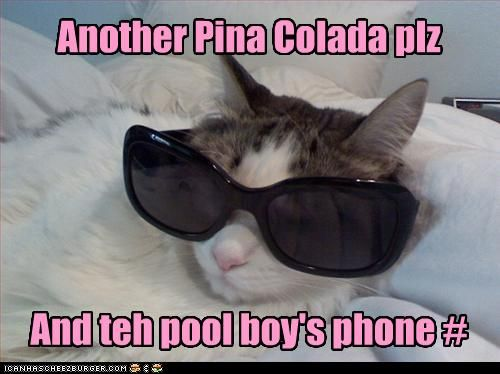 Hah I Love The Sunglasses Funny Cat Pictures Pool Boy Bad Cats
