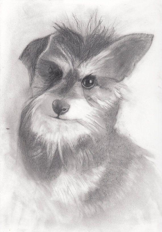 Custom Pencil DrawingPet Portrait Paige by StyllLifes on Etsy