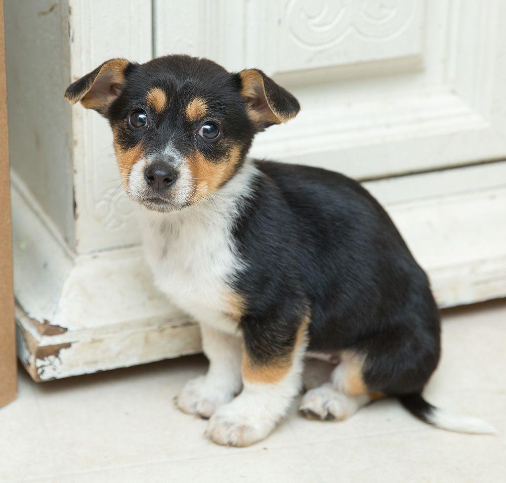 Cojack Dog For Adoption In Crystal Mn Adn 523126 On Puppyfinder Com Gender Female Age Baby Dog Adoption Cojack Dogs