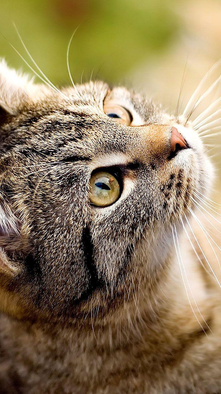 только картинки кошек на телефон пица плитка