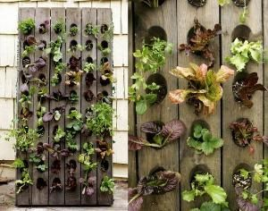 Yet another brilliant small space gardening idea! by sammsfamily