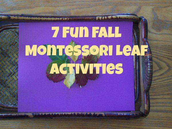 7 Fun Fall Montessori Leaf Activities