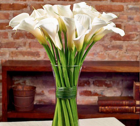 Buque De Copos De Leite Girassol Flores Com Imagens Planta