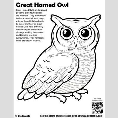 cute bird coloring pages page 2birdorable  free downloads  owl coloring pages owls
