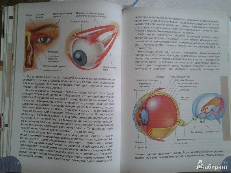 Учебник по биологии человек 8 класс читать онлайн