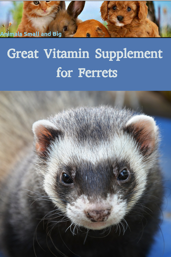 Great Vitamin Supplement For Ferrets In 2020 Vitamin Supplements
