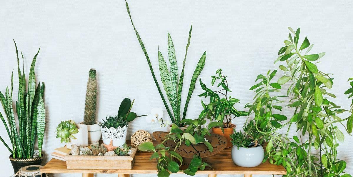 Hard to Kill House Plants
