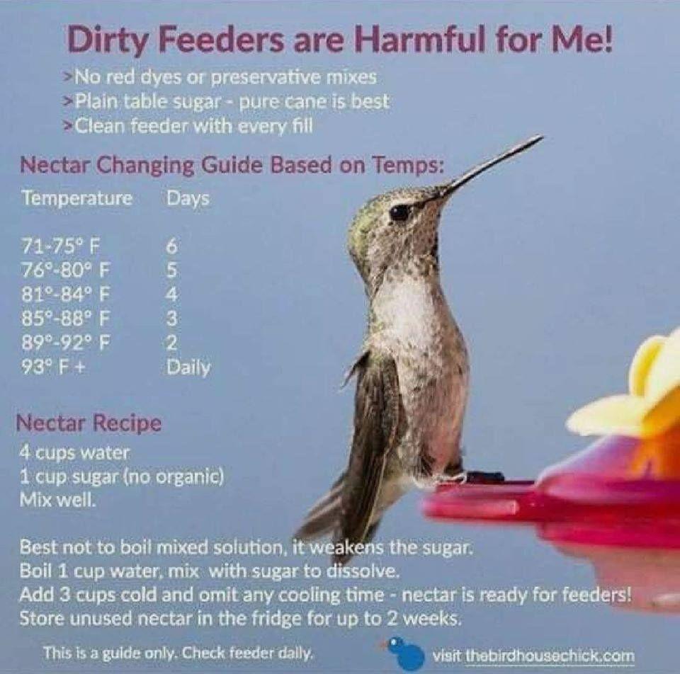 Hummingbird season tips in 2020 Humming bird feeders