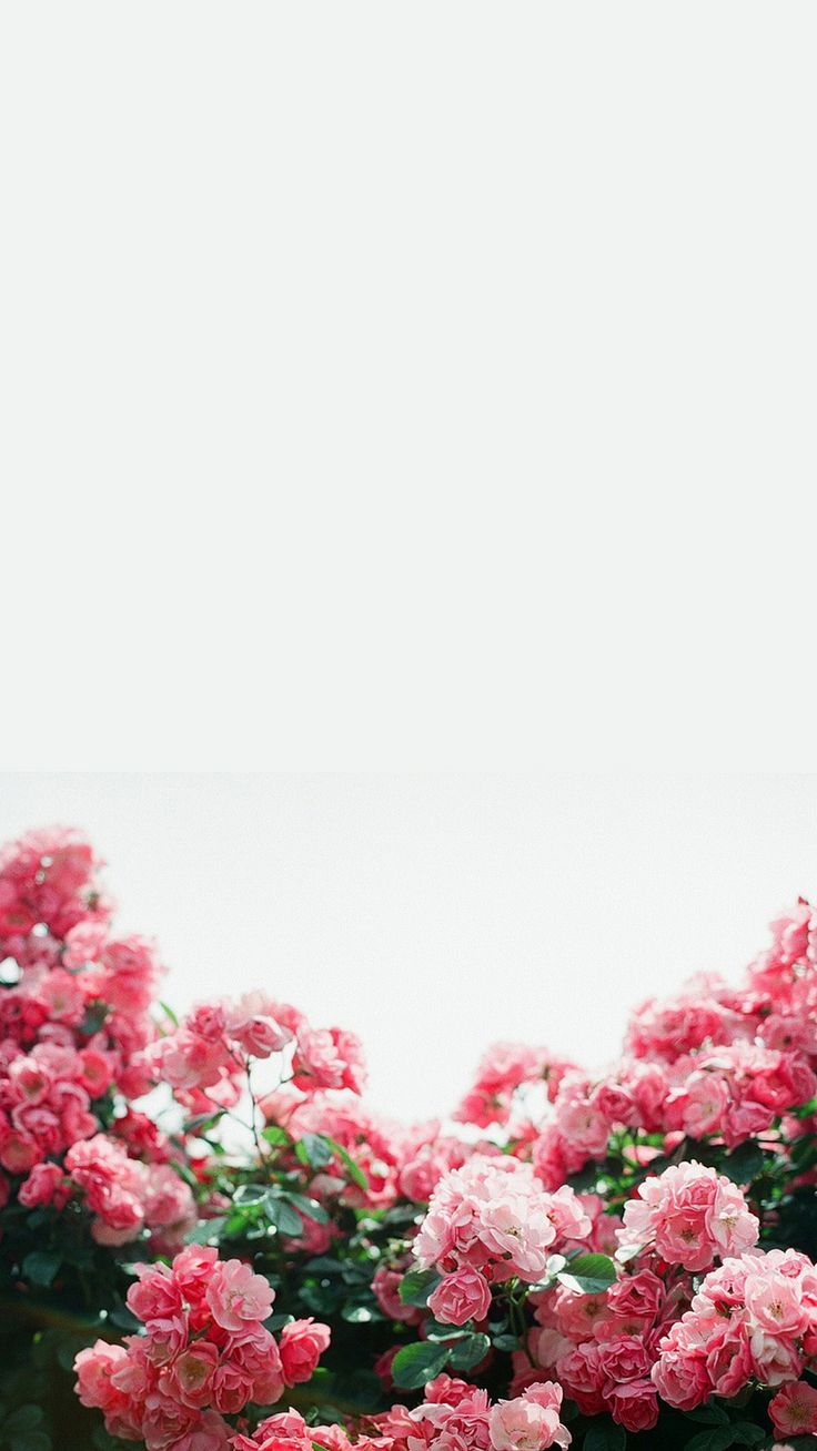 Tumblr iphone wallpaper lock screen - White Pink Floral Flowers Border Frame Iphone Phone Wallpaper Background Lock Screen