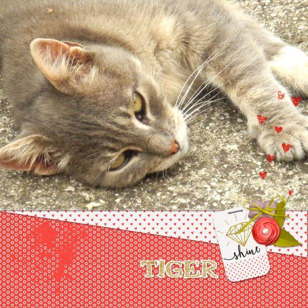 Tiger Scrapbook Scrapbooking Pinterest Tigers Scrapbook