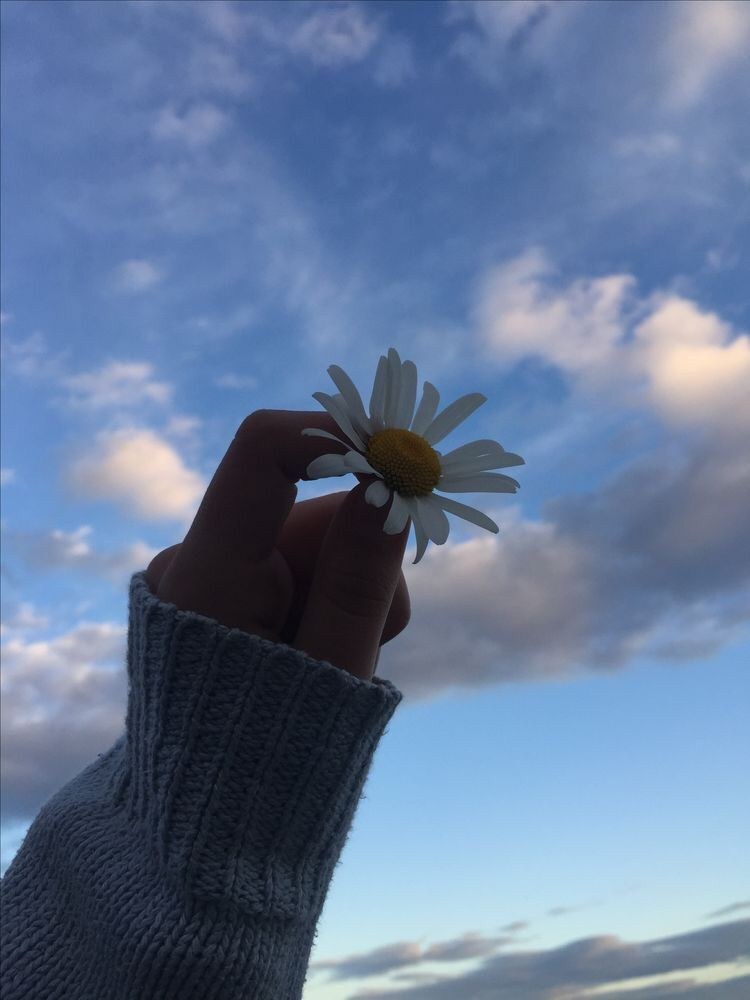 Image about flowers in Aesthetic 🌸 by ᎮᏋᏒᎥ ღ on We Heart It