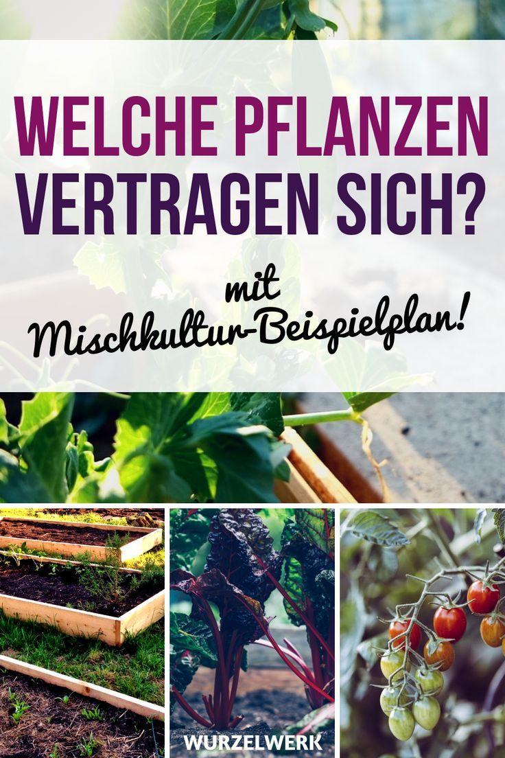 28 Gemüsearten und ihre wirksamsten Mischkultur-Partner + Beispielplan #howtogrowvegetables