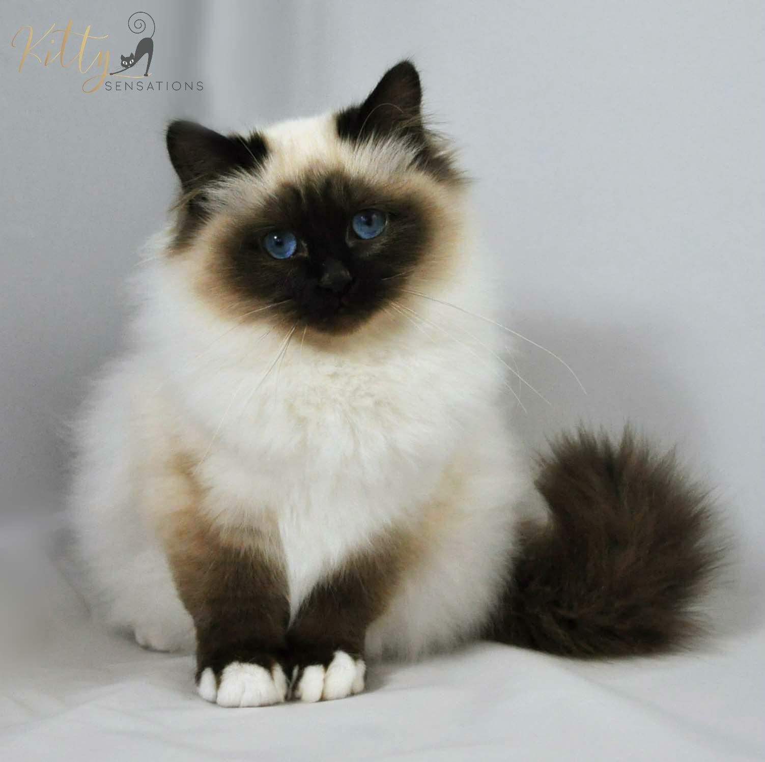 Beautiful kitten! | Kitten | Pinterest | Beautiful kittens, Cat ...