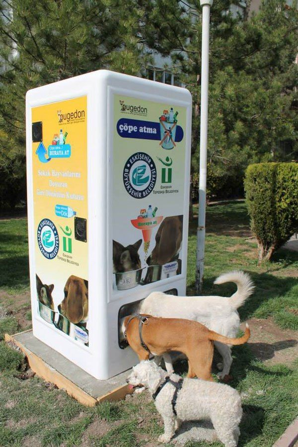 This Machine Feeds Stray Animals in Exchange for Recycled